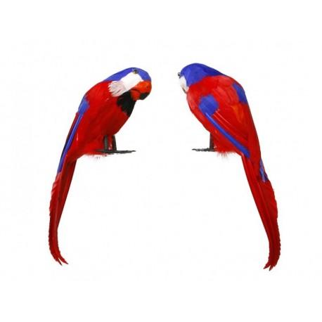 Perroquet en plumes Déguisement Pirate